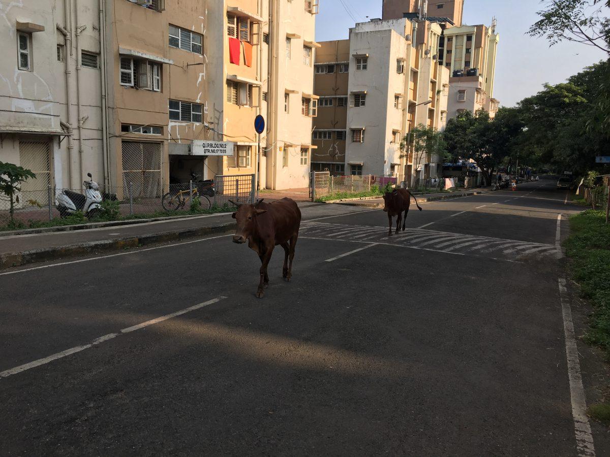 INTERACT 2017 in Mumbai – Part 1