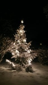 Christmas tree in Uppsala